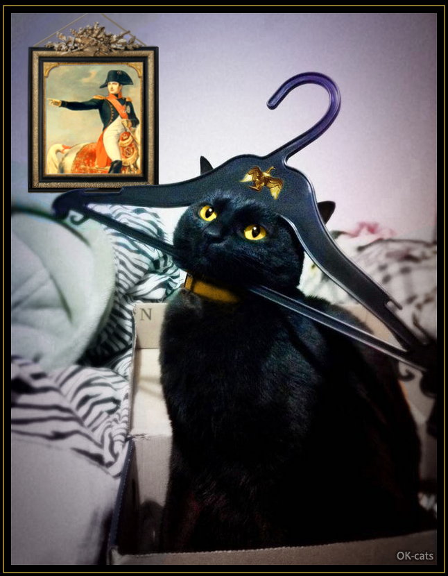 "Photoshopped Cat picture • When your crazy cat thinks he is Napoleon Bonaparte. ""OK kitty, you're doing it right!"""