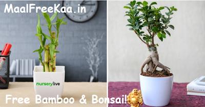 free Bamboo & Bonsai