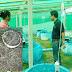 หาเงินได้ง่ายๆ!! วิธีการเลี้ยงกุ้งฝอยในวงบ่อปูนซีเมนต์ เลี้ยงง่ายโตไวราคาหลักร้อย อาชีพแนวใหม่ของเกษตรกร น่าสนนะ!