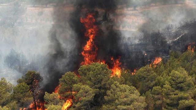 Un desastre ecológico sin precedentes en el verano del 2012 en Valencia.