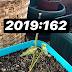 162- Toz tarçınla bitkileri canlandırmak