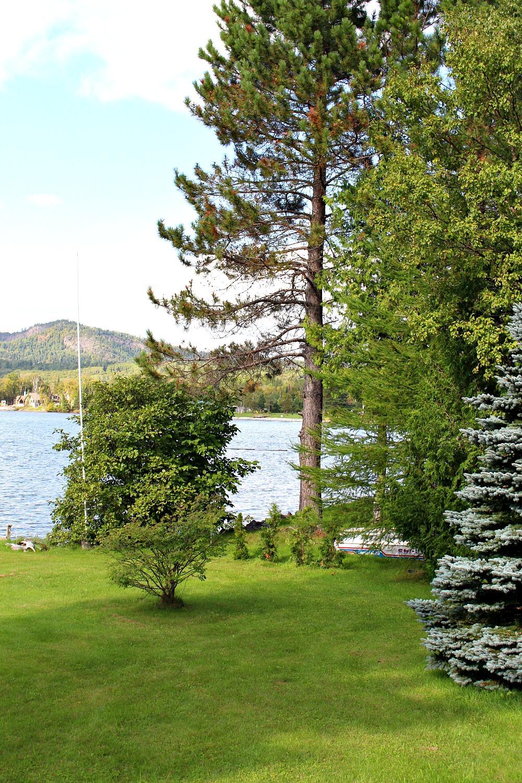 Newly Planted Cedar