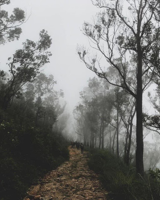 යකාගේ පඩිපෙළක්නේ මේක - ඔබ් 🤔🌱🍃🎋 (Devil's Staircase) - Your Choice Way