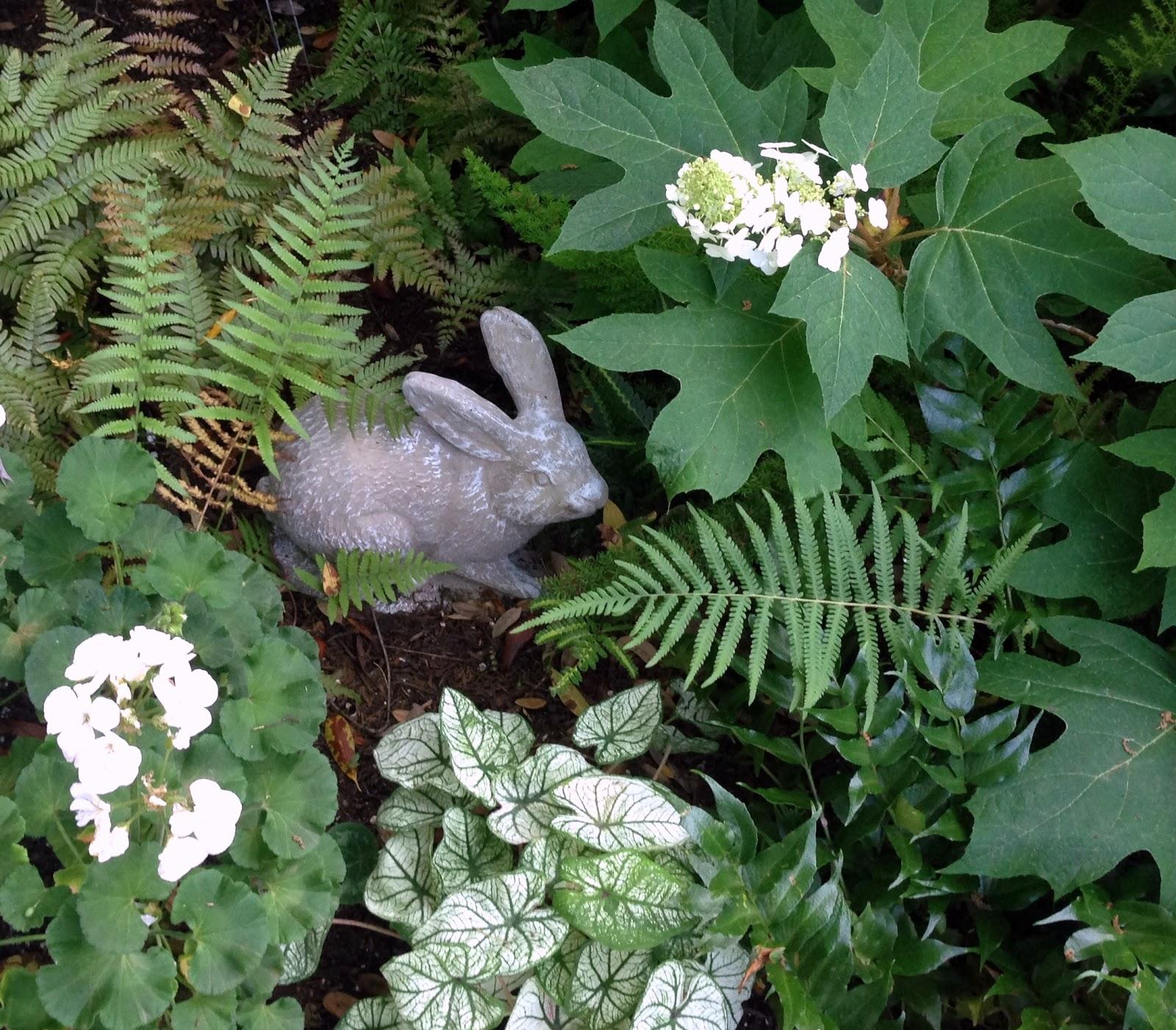 Do Ferns Grow Under Oak Trees : Hyacinths for the soul garden girl