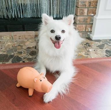 Hyper Pet Disney Hamm Super Squeaker Dog Toy