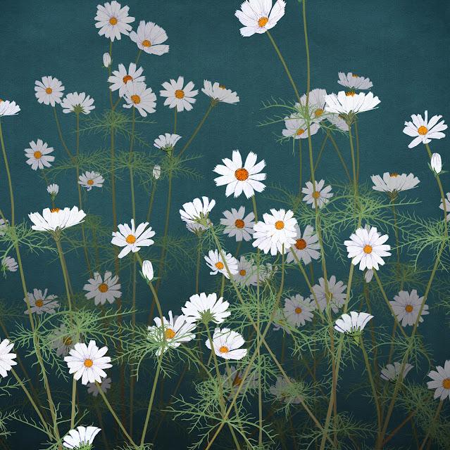 flores blancas, dibujo