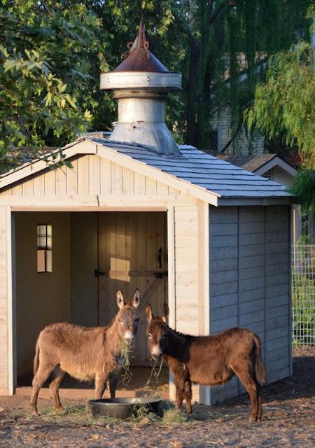 Donkeys at Patina Farm - found on Hello Lovely Studio