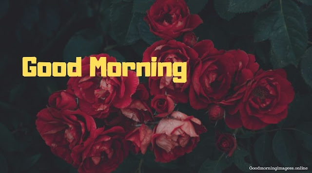 Good Morning Images In Roses 2