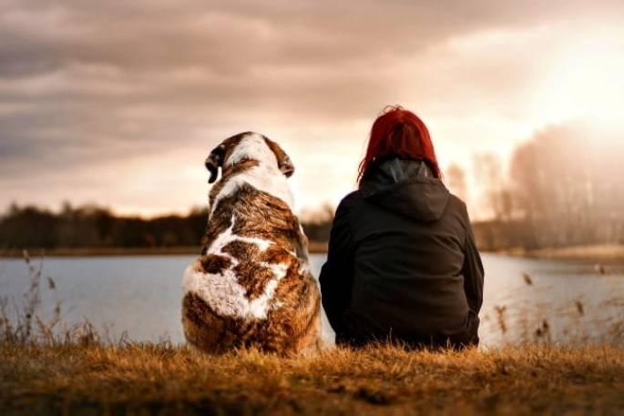 köpek bakımı hizmeti
