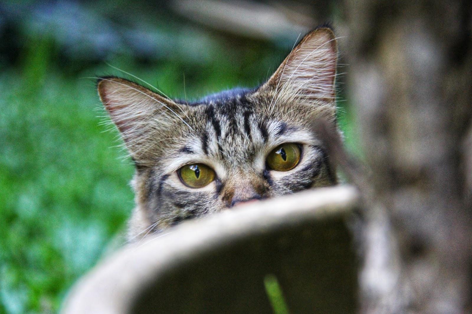 20 Koleksi Gambar Kucing Comel Bernama Tambi 17