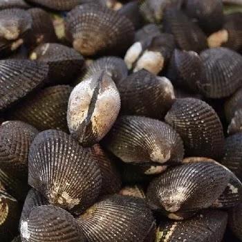 शिंपल्या, Clams fish name in Marathi
