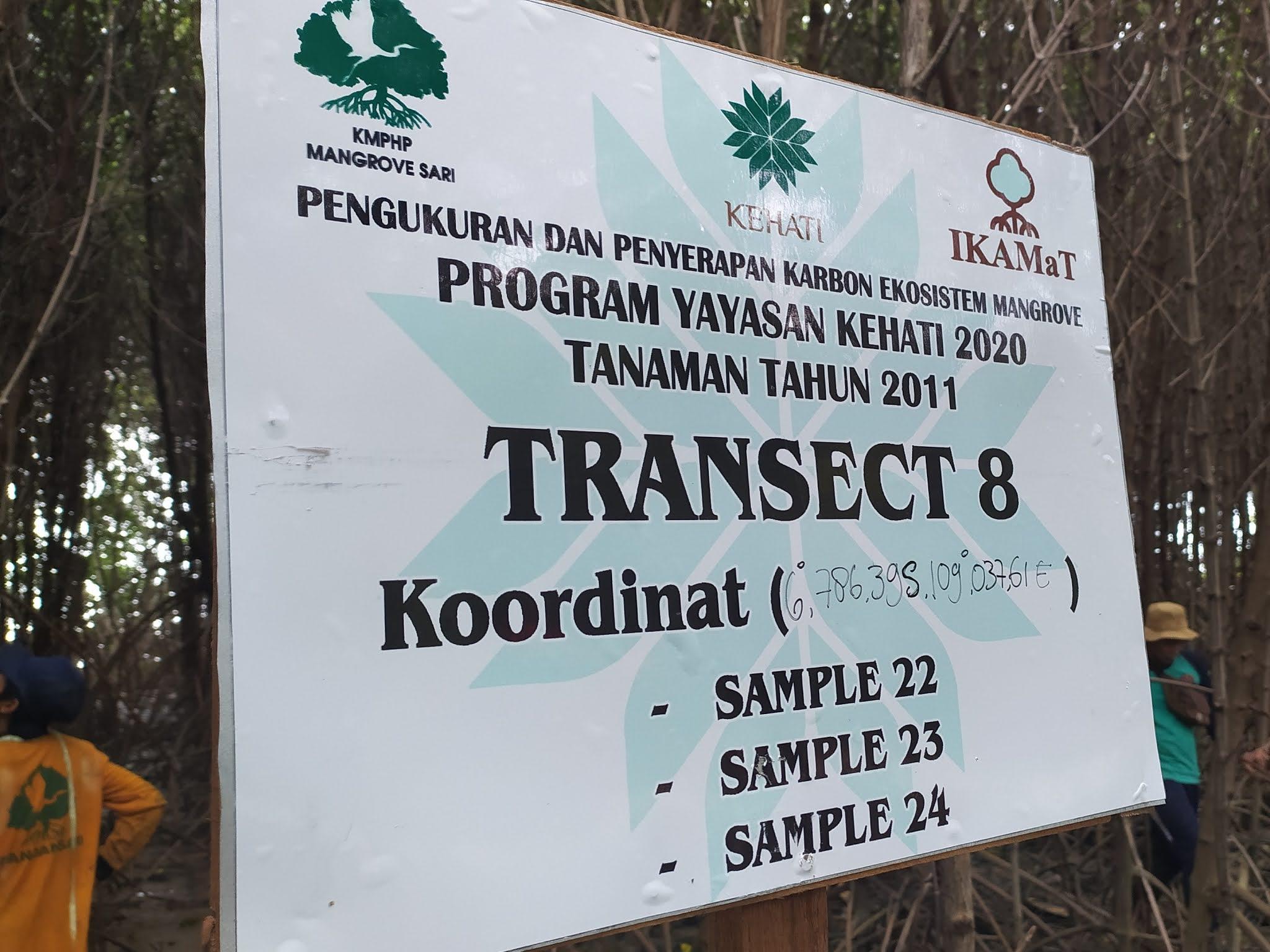 Jasa Konsultasi Rehabilitasi Ekosistem Mangrove