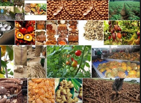 agro allied business in nigeria and kenya