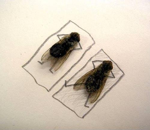 Foto Lalat Wow dan keren