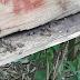 Agrotóxicos piratas podem estar matando abelhas em Prudentópolis