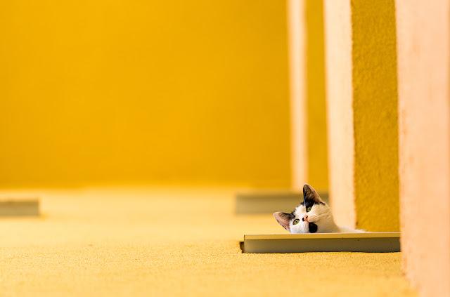 Bức ảnh được chụp bằng Nikon D4. Chọn đối tượng trong phong cách tối giản: Nghệ thuật của sự đơn giản