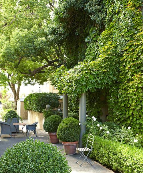 Lush Parisian inspired courtyard at ivy house by Myra Hoefer #ivyclad #climbingvines #Frenchinspired