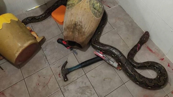 Bangkok, News, World, Injured, Woman, Snake, hospital, Son, Daughter, attack, Woman gets bitten by snake hiding inside toilet