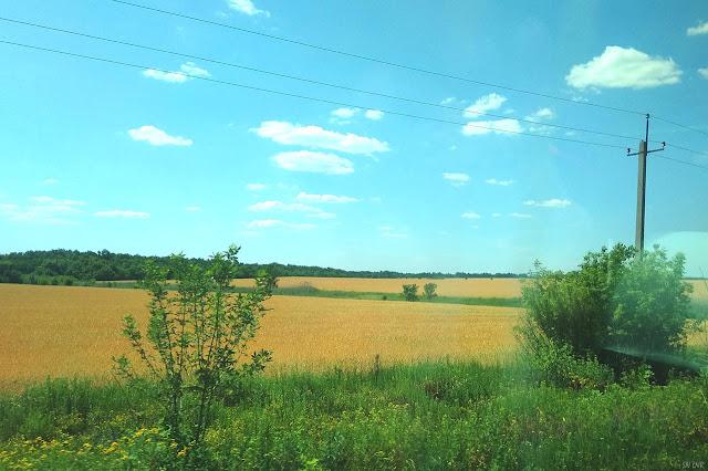 Пшеничные поля ЛНР