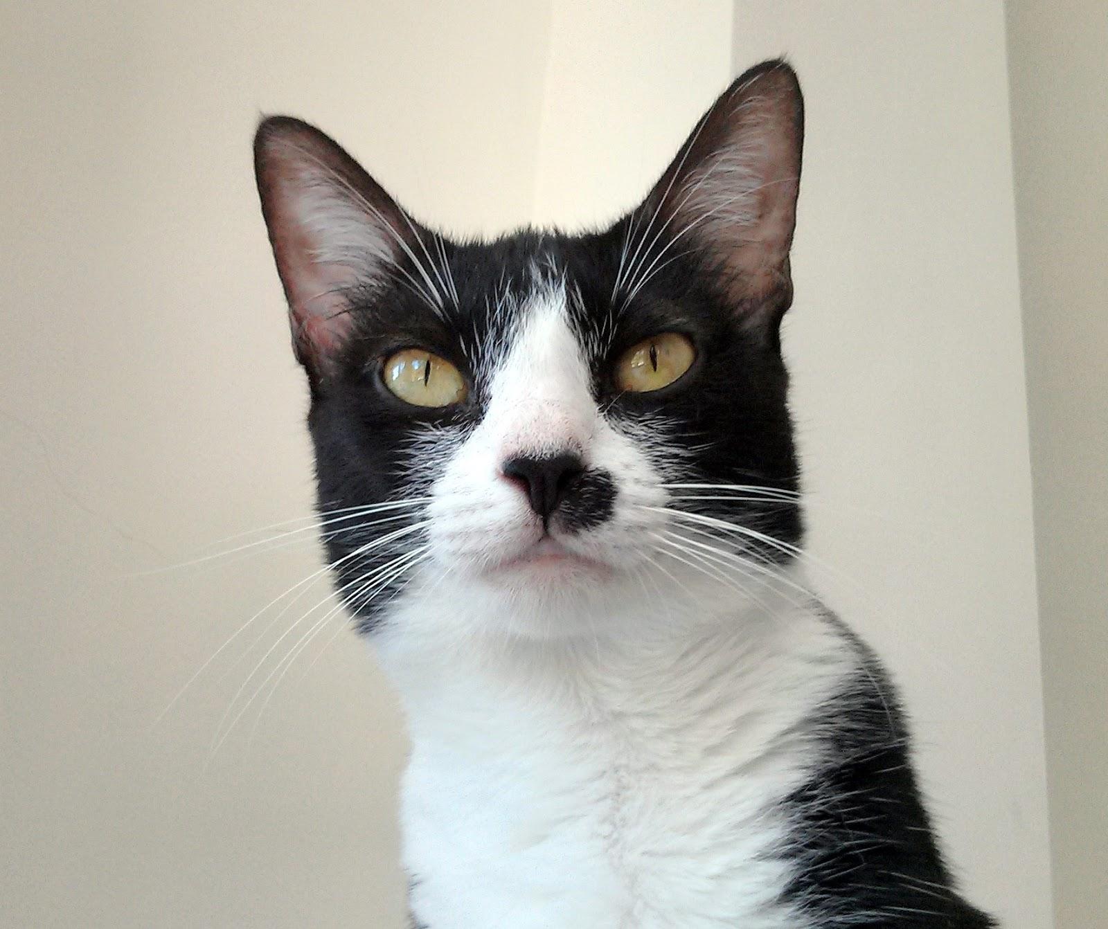 「cat voice」の画像検索結果