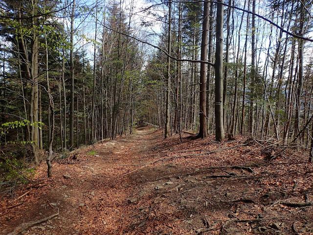 Zielony szlak na Przełęcz Rydza Śmigłego