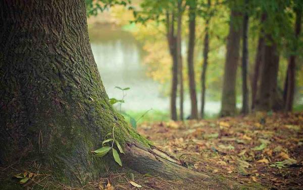 Έρευνα: Ο εκπληκτικός τρόπος που τα δέντρα βοηθούν το ένα το άλλο για να επιβιώσουν στο δάσος