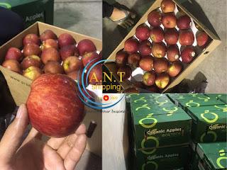 thủ tục hải quan nhập khẩu trái cây