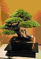 Gambar Bonsai tegak lurus tidak teratur