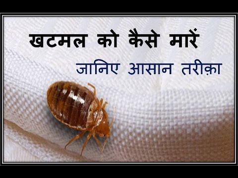 Bed Bugs kills spray hindi
