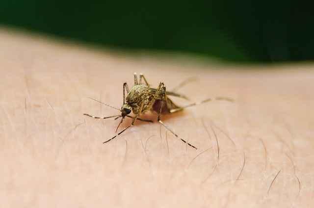 Malaria ke lakshan