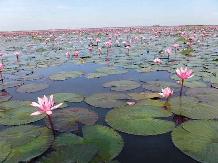 Nong Harn Lake of Udonthani