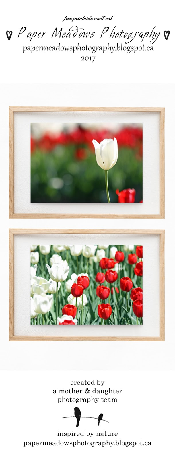 Pin us! Paper Meadows Photography Blog-Free Printable Wall Art Set-Red and White Tulip Garden