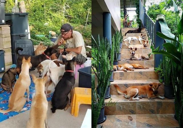 Супружеская пара приютила 15 собак, а они стали для них настоящим спасением