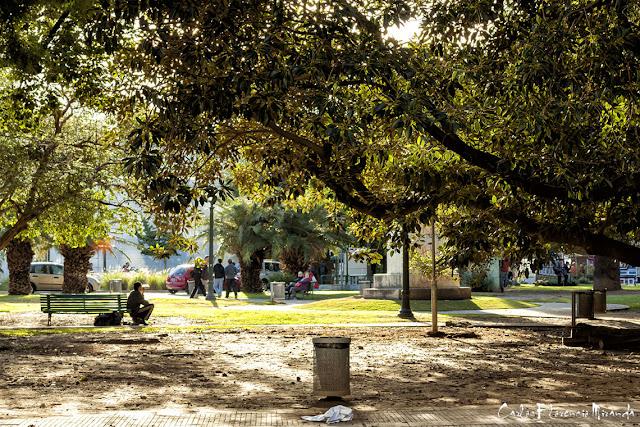 Ver a través del follaje gente descansando en el parque