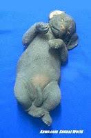 Sandicast Chocolate Lab Puppy on Back Figurine Statue