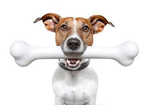 La imagen de un perro con su hueso es una de esas imágenes clásicas en los medios de comunicación
