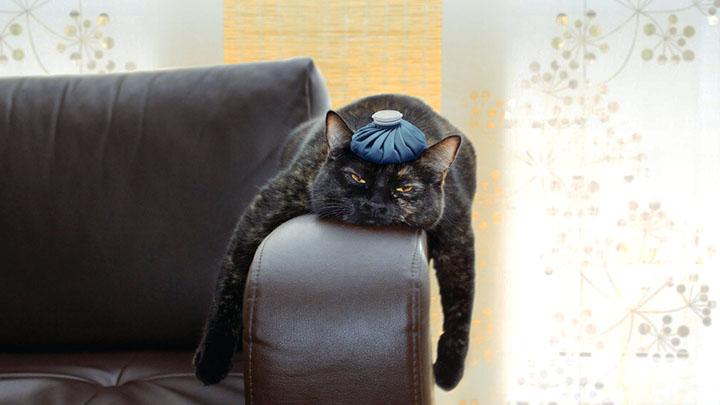 cat training collar