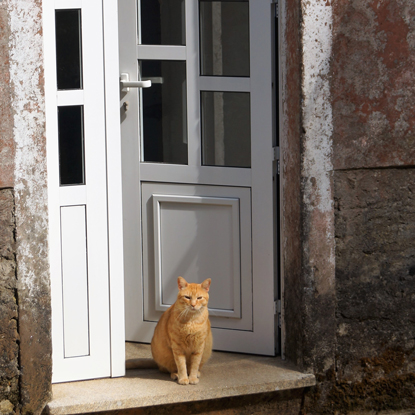 a ginger cat sitting in a doorway