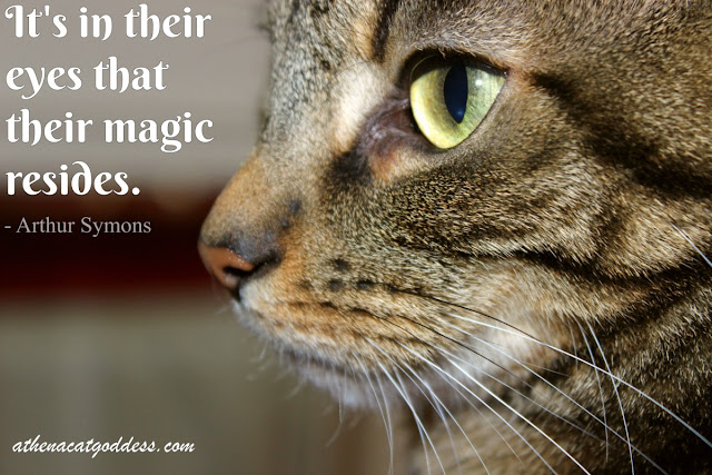 It's in their eyes that their magic resides