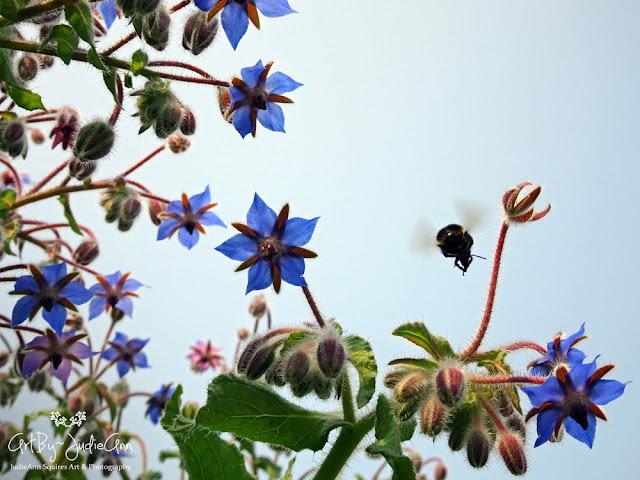 Borage & Bees 21 Photo Prints