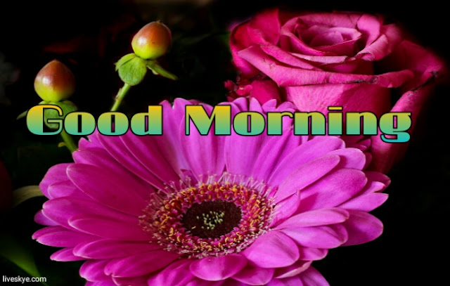 good morning images for whatsapp free download