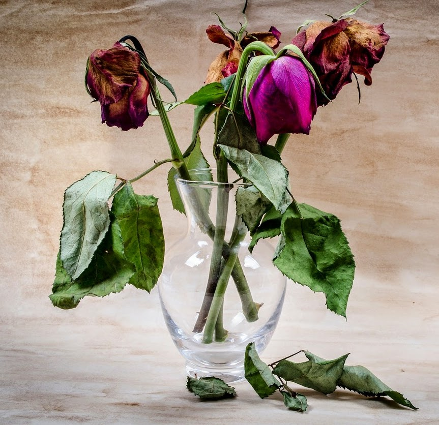 Image of vase of wilted roses