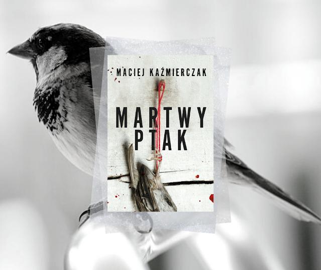 #521. Martwy ptak | Maciej Kaźmierczak