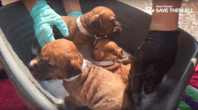 Собака привела спасателей к попавшему в беду щенку, показав всю силу материнской любви — видео