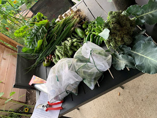A lot of picked produce on patio table