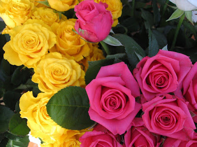 hd rose flower images