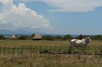 Coastal Badoc Bull Views Ilocos Norte Philippines