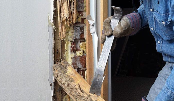 6 Easy Ways To Prevent Termites From Spreading In Your Home