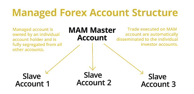 Forex mam brokers