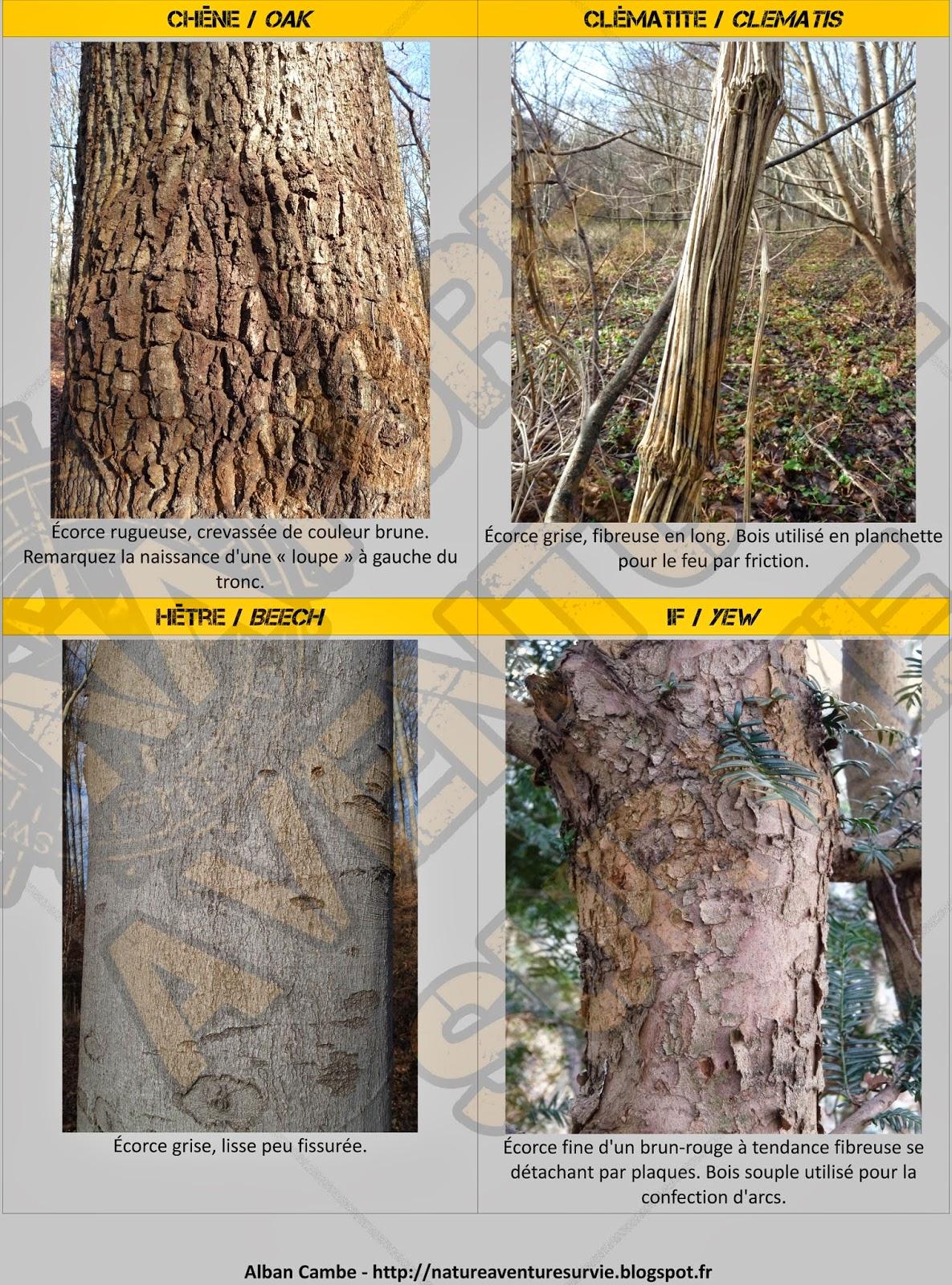 Connu Nature Aventure Survie: Identifier les arbres en hiver YK92